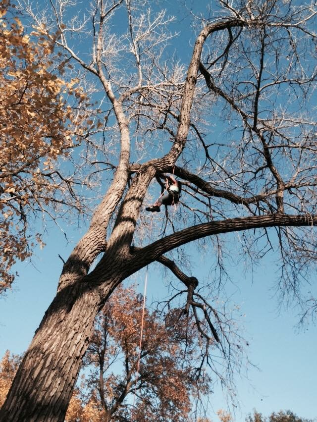 Tree Services of Omaha - Facebook