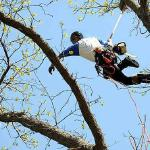 Tree Services of Omaha is a full service tree care provider in Omaha, Nebraska offering tree removal, tree trimming, stump removal, stump grinding, tree health care, and arborist consultations.