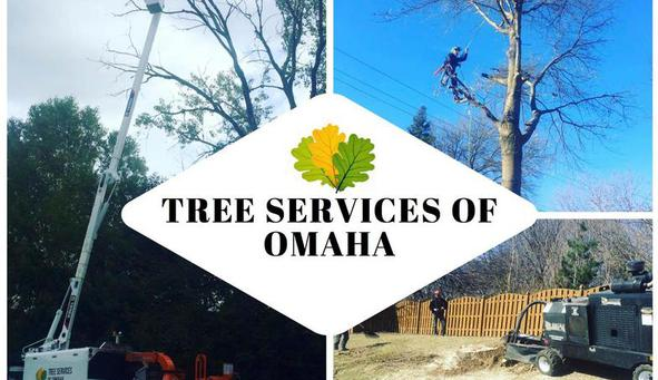 Tree Services of Omaha - 402-650-4773